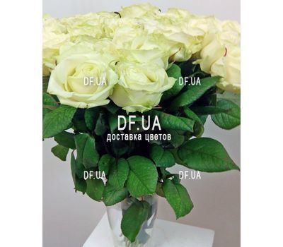 """""""19 white roses bouquet - view 3"""" in the online flower shop df.ua"""