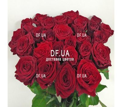 """Bouquet of 29 red roses - wiev 5"" in the online flower shop df.ua"