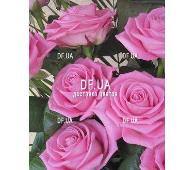 """Bouquet of 13 pink roses - view 2"" in the online flower shop df.ua"