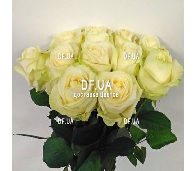 """""""Bouquet of 15 white roses - view 5"""" in the online flower shop df.ua"""