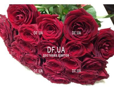 """Bouquet of 19 red roses - view 1"" in the online flower shop df.ua"