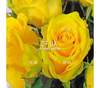 """Bouquet of 21 yellow roses - view 2"" in the online flower shop df.ua"