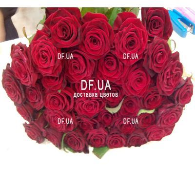 """Bouquet of 27 red roses - wiev 4"" in the online flower shop df.ua"