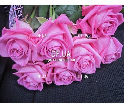 """Bouquet of 7 roses view 1"" in the online flower shop df.ua"