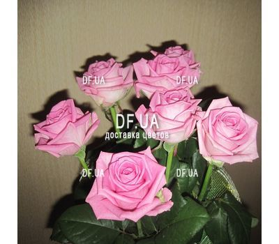 """Bouquet of 7 roses view 3"" in the online flower shop df.ua"