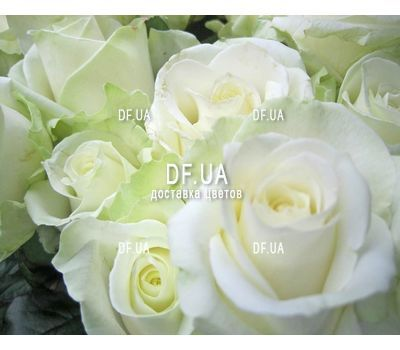 """Delicate bouquet of roses - view 2"" in the online flower shop df.ua"
