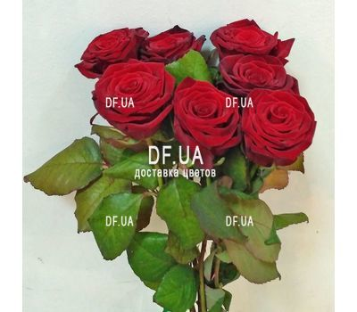"""""""Simple bouquet of 7 roses view 1"""" in the online flower shop df.ua"""