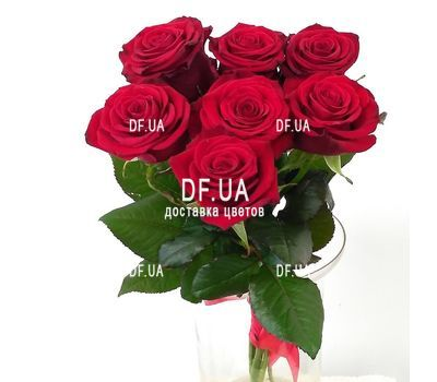 """""""Simple bouquet of 7 roses view 3"""" in the online flower shop df.ua"""
