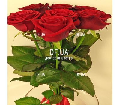 """Simple bouquet of 7 roses view 5"" in the online flower shop df.ua"
