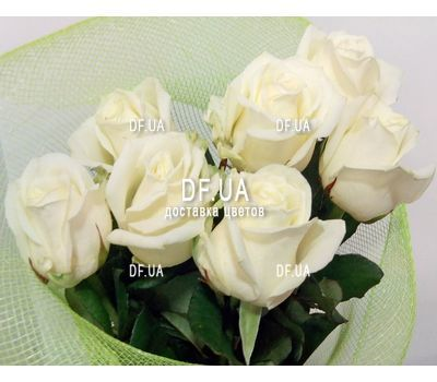 """Seven white roses - view 3"" in the online flower shop df.ua"