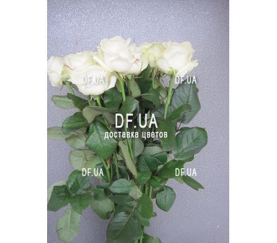 """11 white roses - view 1"" in the online flower shop df.ua"