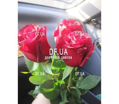 """""""3 imported red roses - view 1"""" in the online flower shop df.ua"""