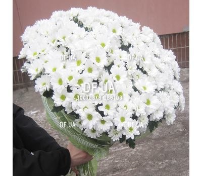"""Bouquet of beautiful daisies - view 1"" in the online flower shop df.ua"