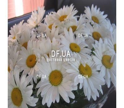 """""""Букет ромашек - вид 1"""" в интернет-магазине цветов df.ua"""