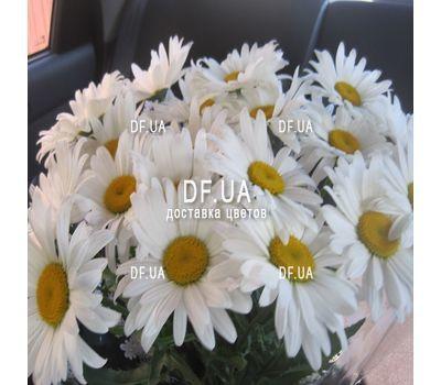 """""""Букет ромашек - вид 2"""" в интернет-магазине цветов df.ua"""