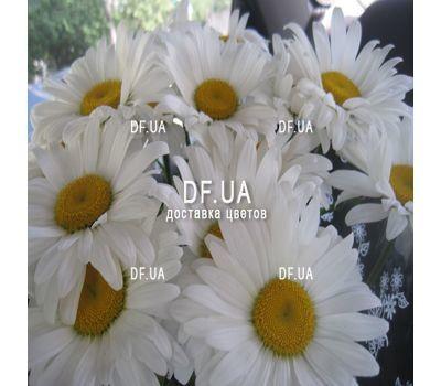 """""""Букет ромашек - вид 3"""" в интернет-магазине цветов df.ua"""