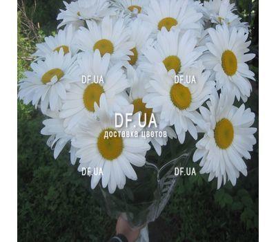 """""""Букет ромашек - вид 5"""" в интернет-магазине цветов df.ua"""