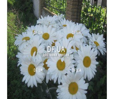 """""""Букет ромашек - вид 6"""" в интернет-магазине цветов df.ua"""