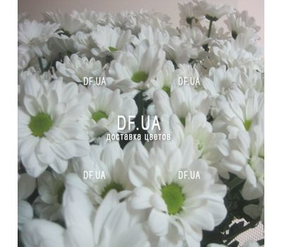 """Bouquet of chamomile - view 1"" in the online flower shop df.ua"