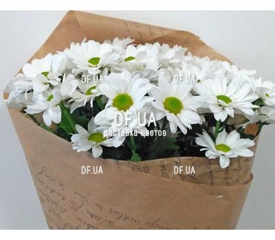 """Bouquet of chamomile - view 5"" in the online flower shop df.ua"