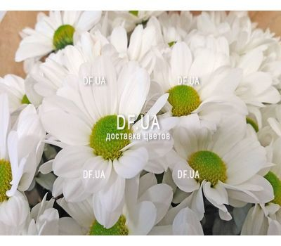 """Bouquet of chamomile - view 6"" in the online flower shop df.ua"
