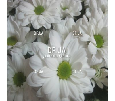 """A bouquet of chamomiles - view 1"" in the online flower shop df.ua"