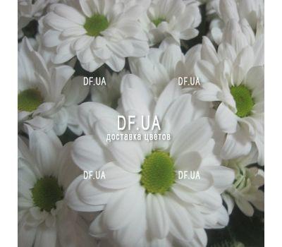 """""""Букетик ромашек - вид 1"""" в интернет-магазине цветов df.ua"""