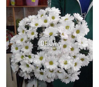 """A bouquet of chamomiles - view 2"" in the online flower shop df.ua"