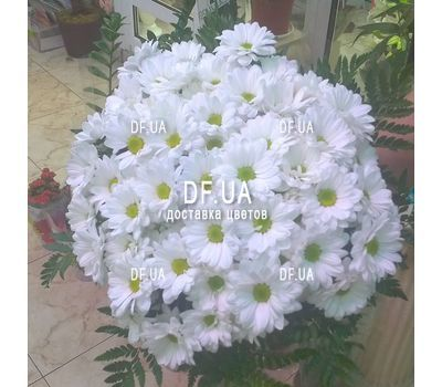 """A bouquet of chamomiles - view 3"" in the online flower shop df.ua"