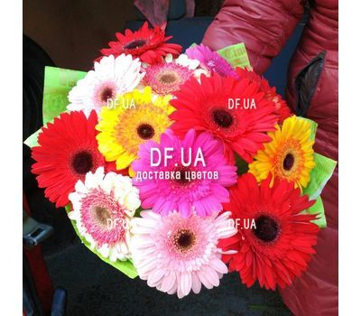 """Gerberas to buy - view 1"" in the online flower shop df.ua"