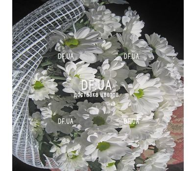 """""""Beautiful camomiles - view 3"""" in the online flower shop df.ua"""