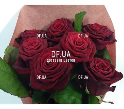 """7 red roses - view 5"" in the online flower shop df.ua"