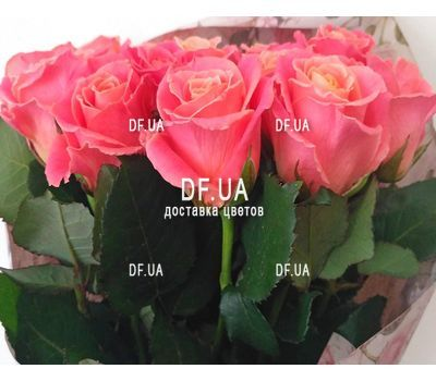 """17 peach roses - view 2"" in the online flower shop df.ua"