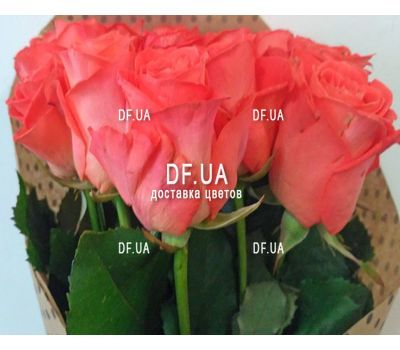 """Bouquet 15 coral roses - view 7"" in the online flower shop df.ua"