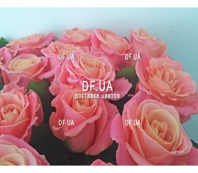 """Bouquet of 21 roses - view 3"" in the online flower shop df.ua"