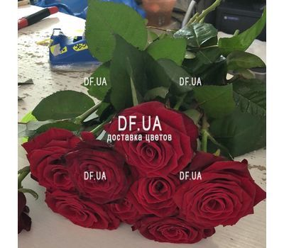 """Bouquet of 9 burgundy roses - view 6"" in the online flower shop df.ua"