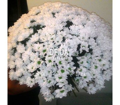"""Bouquet of beautiful daisies - view 2"" in the online flower shop df.ua"