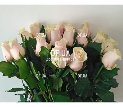 """Cute bouquet of cream roses - view 2"" in the online flower shop df.ua"